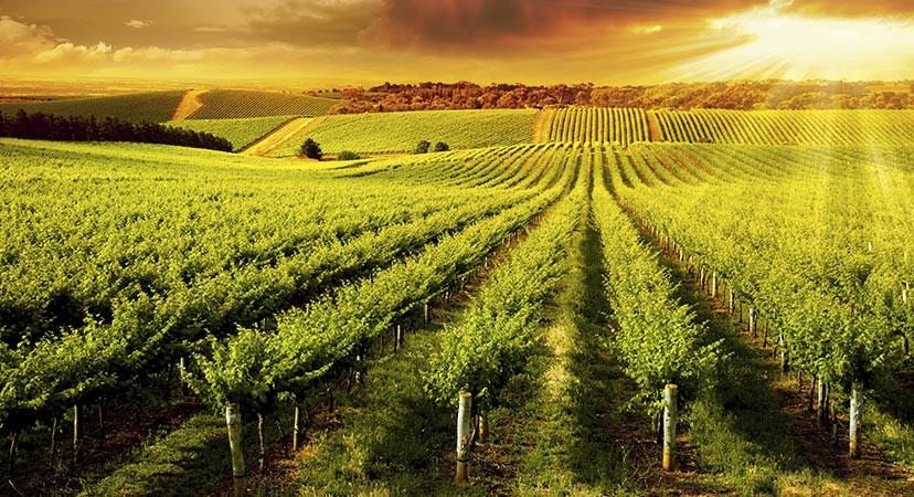 请回答:希腊,意大利和法国葡萄酒,你v攻略哪瓶?古剑攻略诛仙完美奇缘结局图片