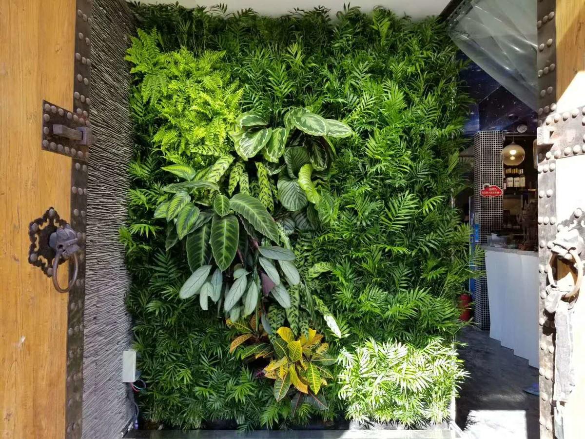 蒸唯鲜墙上花园完工 - 植物墙|垂直绿化|绿植墙|墙面