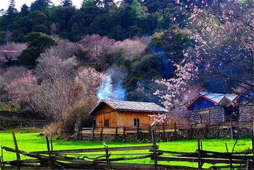 2020年3-4月金川梨花,波密林芝桃花,羊湖10日游行程计划